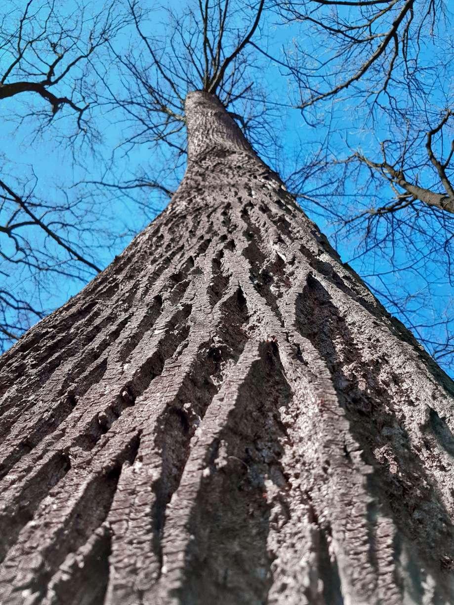 kmeň stromu