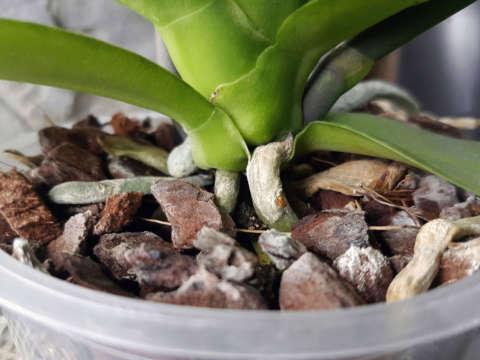 Substrát pre orchidey