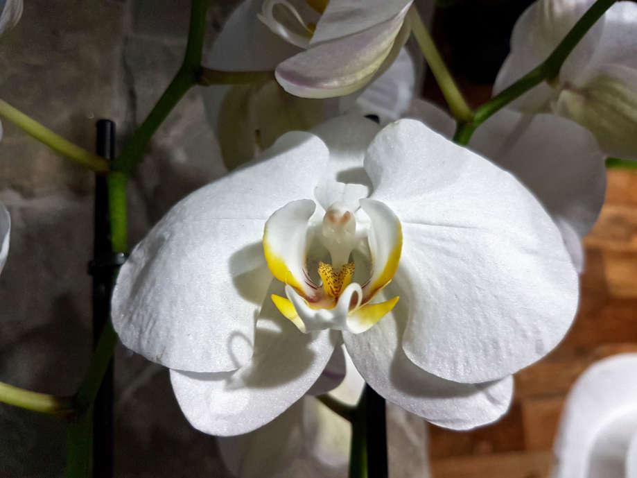 Pestovanie orchideí