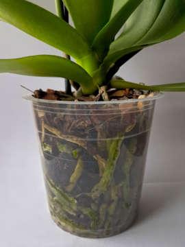 Priehľadný kvetináč na orchideu