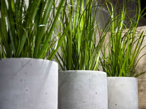 Zelená umelá okrasná tráva