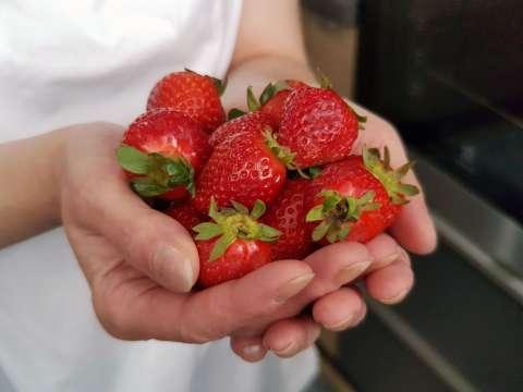 jahody v ruke