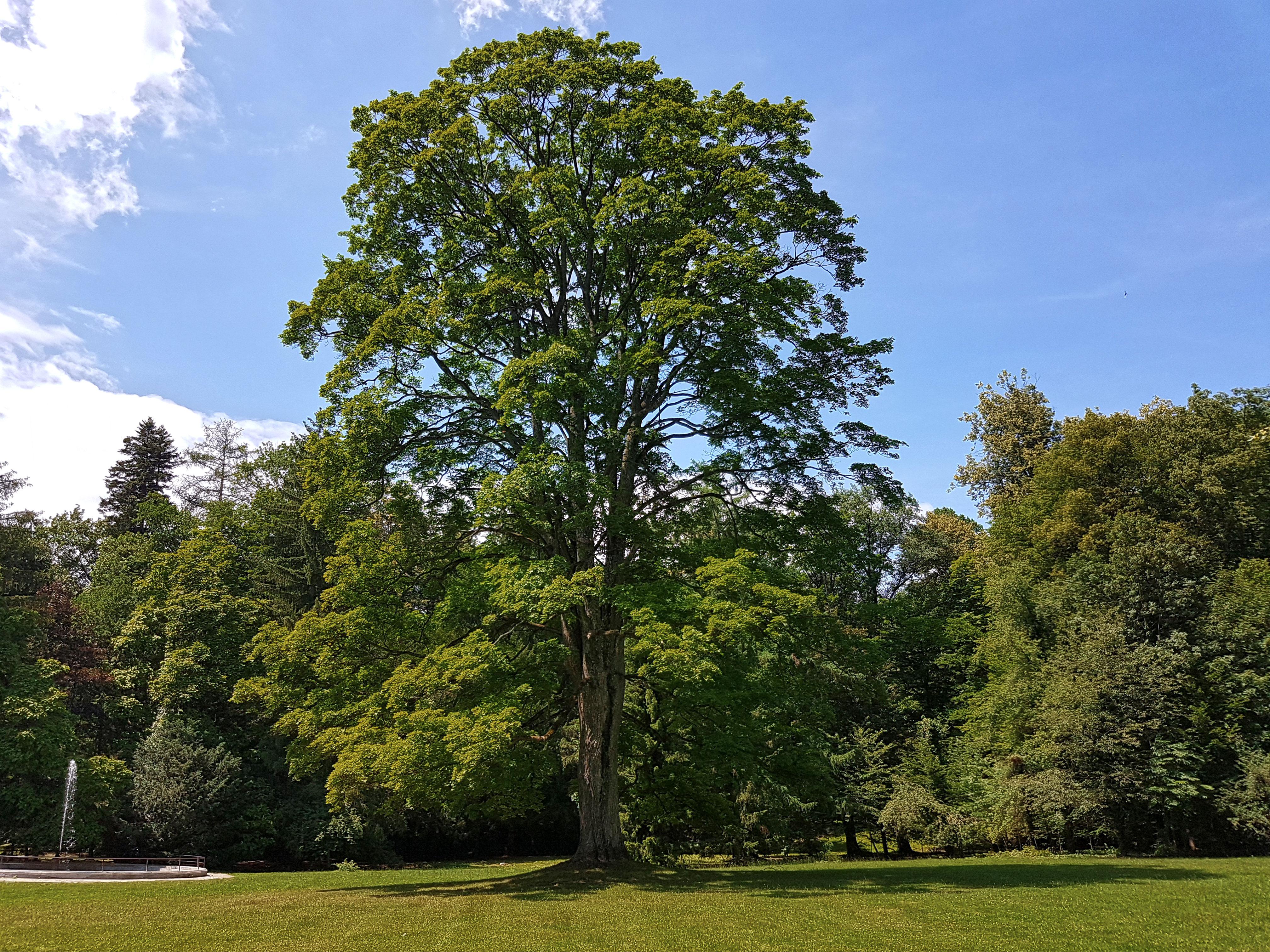 strom v zamockom parku
