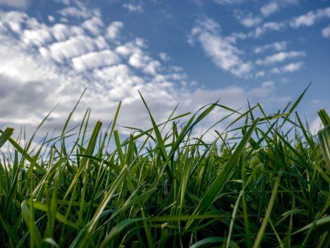 Detail trávy