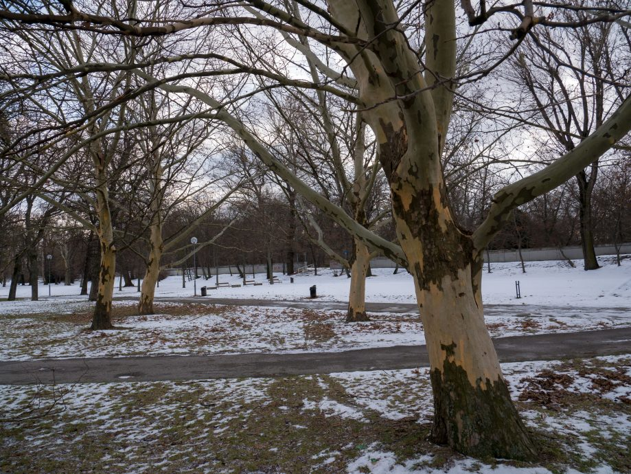 Park v zime