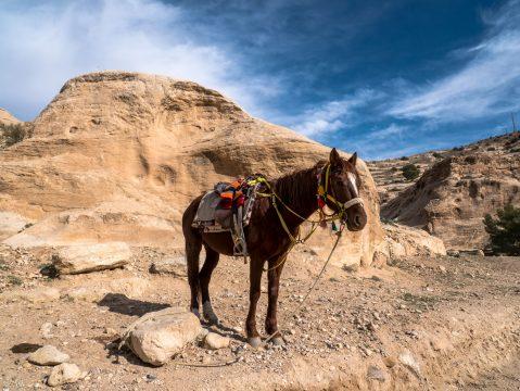 Kôň v púšti