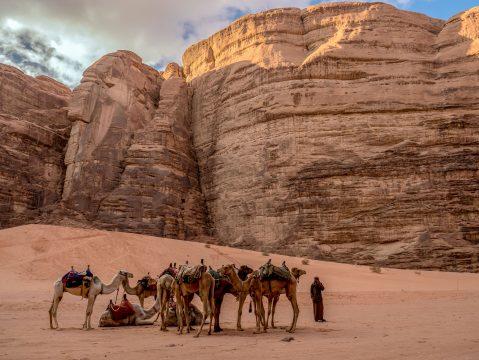 Ťavy v jordánskej púšti Wadi Rum