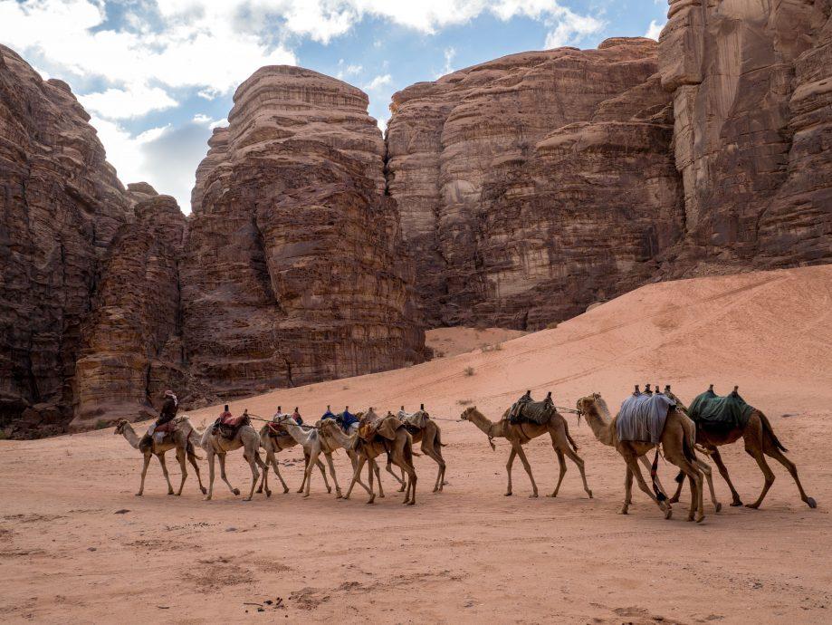 Ťava v jordánskej púšti