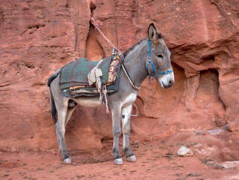 Osol púšť Wadi Rum