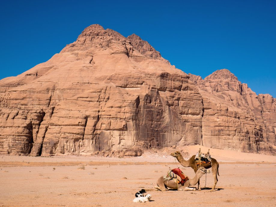 Zvieratá v púšti