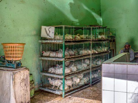 Sliepky v klietkach