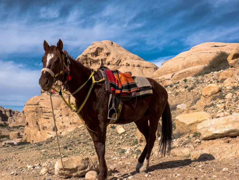 Turistika v Jordánsku na koni
