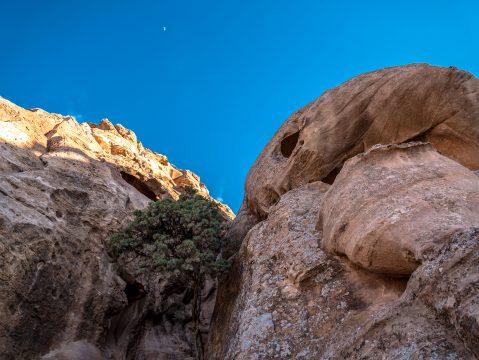 Strom v skalách