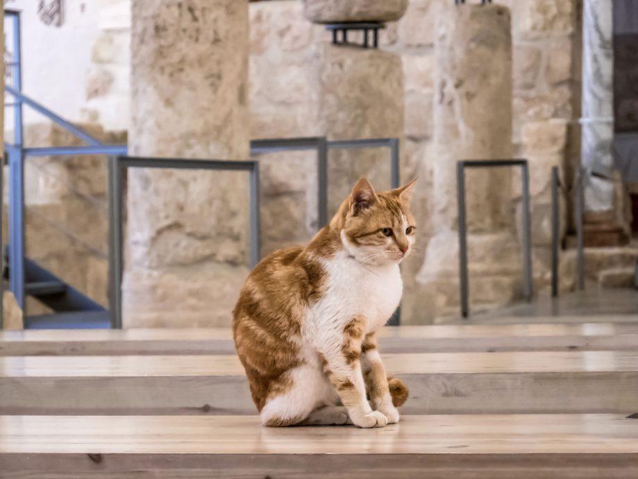 Mačka v kláštore
