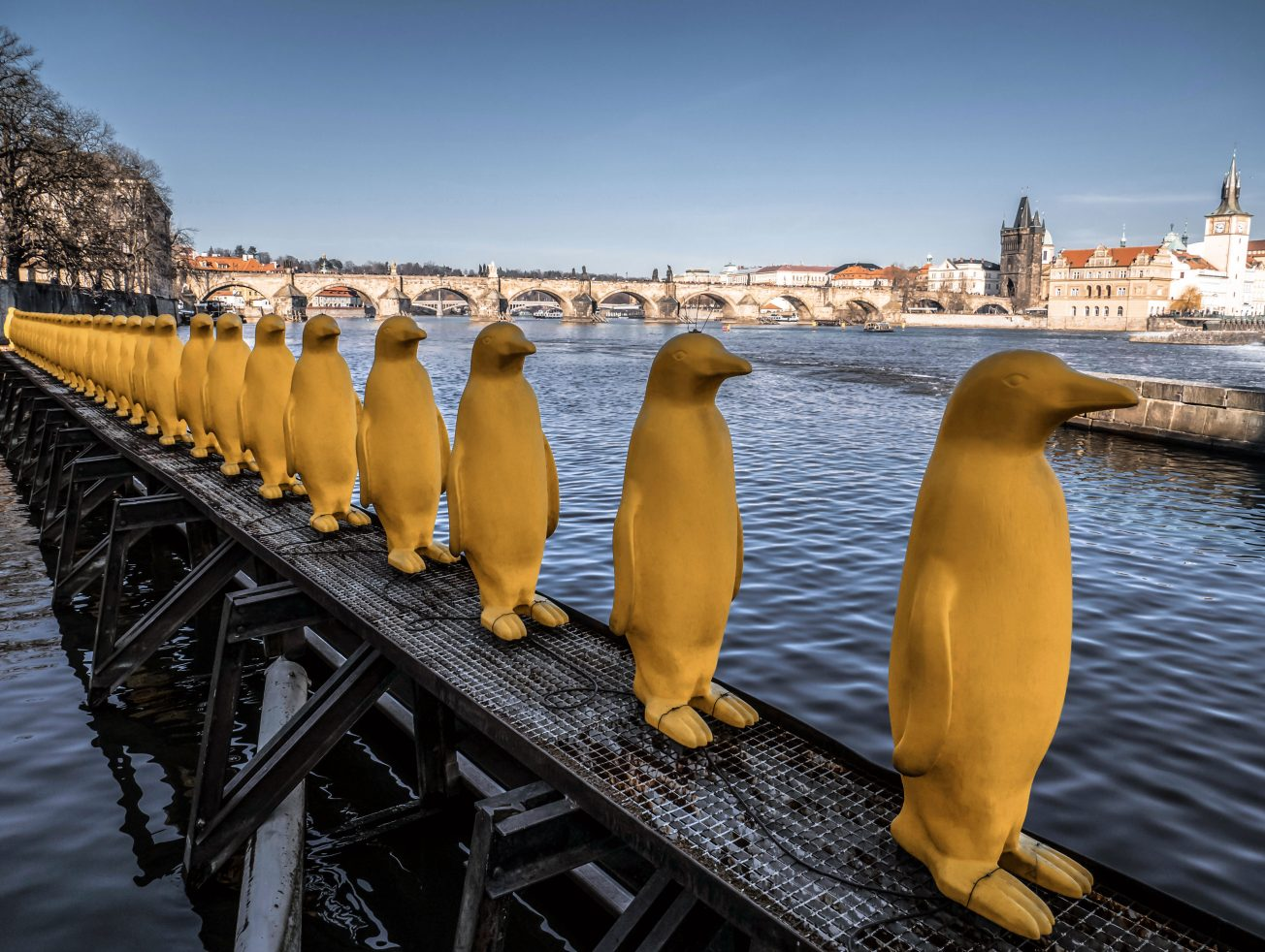 Fotka žlté tučniaky na kampe