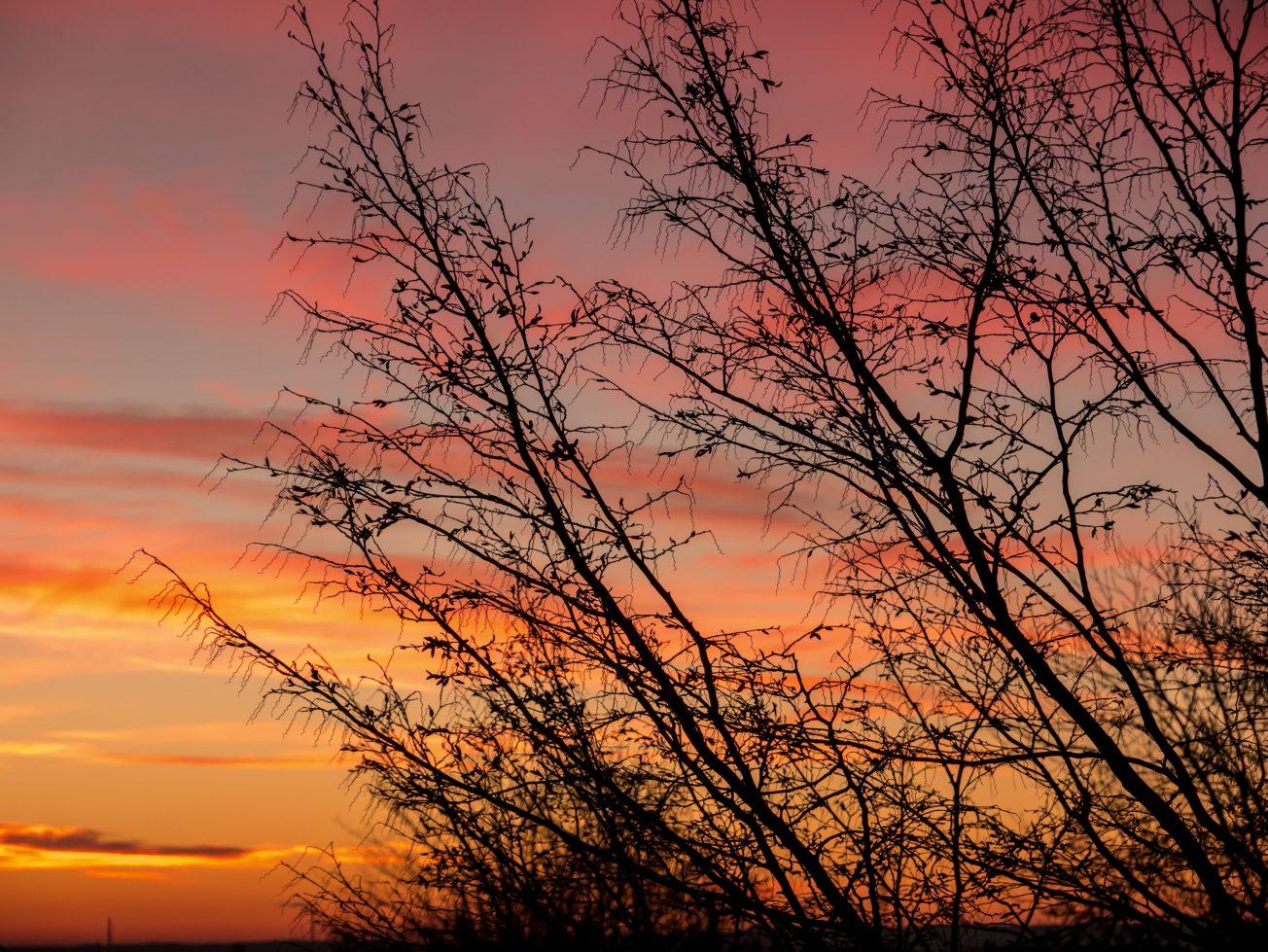 Západ slnka kríky