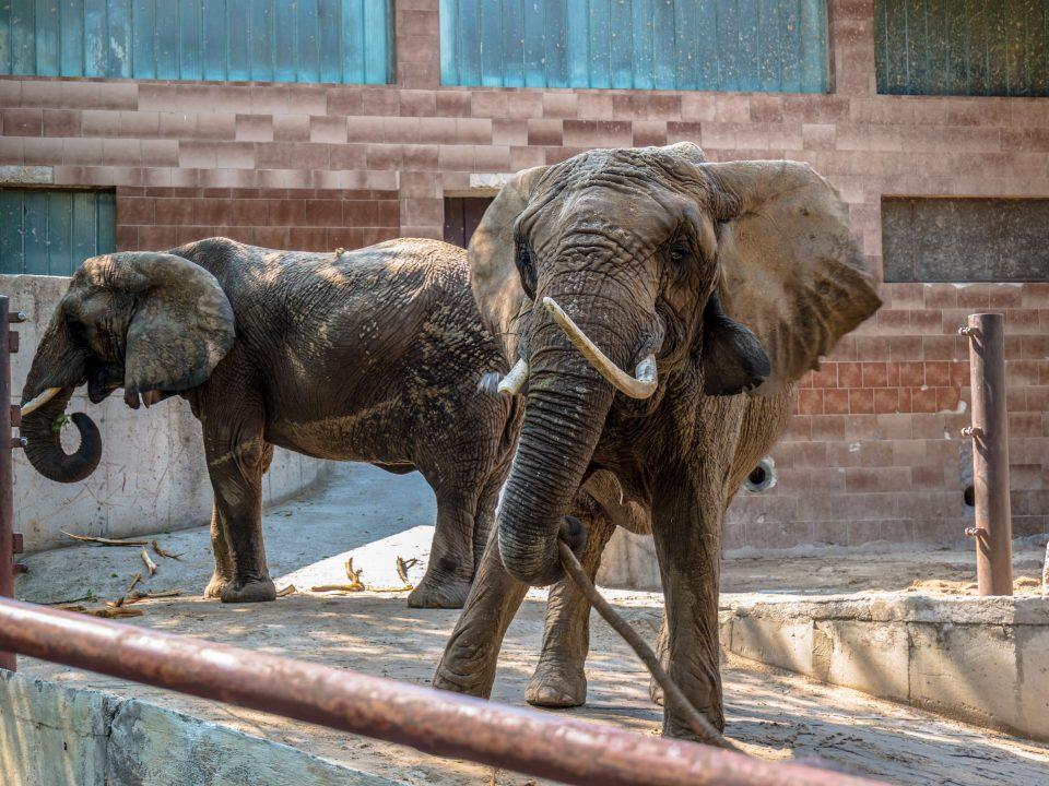 Slony v ZOO Bojnice