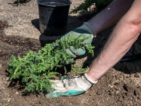 Sadenie rastlín