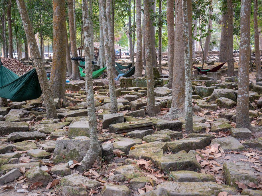 Stromy Angkor Vat