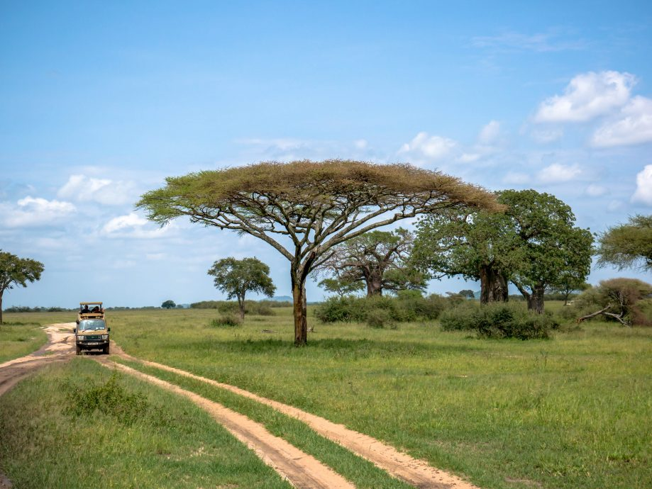 Safari Tanzánia
